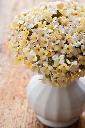 Yellow kalanchoe flower