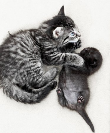 Cute kittens on floor