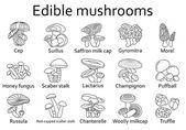 Edible mushrooms icons set Vector illustration