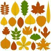 Set of tree leaves Twenty different icons Various elements for design Cartoon vector illustration Autumn colors green orange yellow red