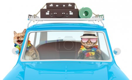 Funny cats are going on vacation in a car