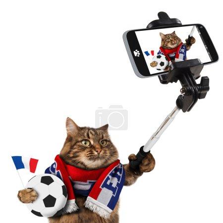 Funny cat - Selfie picture