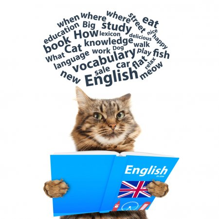Funny cat is learning English