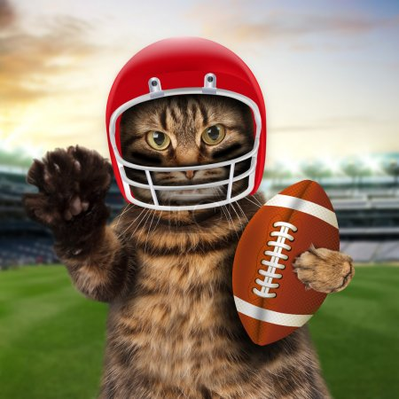 Cat playing American football.