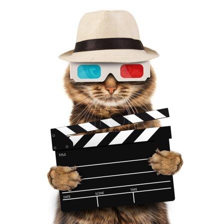 Movie director cat
