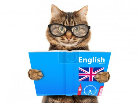Photo for Funny cat is learning English. Cat reading a book. - Royalty Free Image