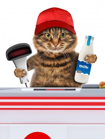 Cat working as a cashier