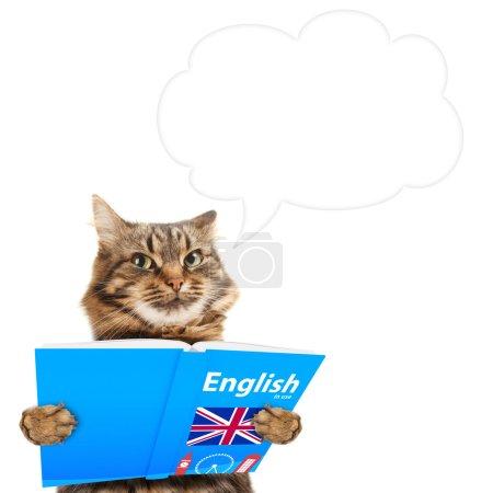Photo pour Chat drôle apprend l'anglais. Chat en lisant un livre. Bulle de dialogue au-dessus de la tête - image libre de droit