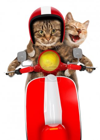 Photo for Funny cats - driving a moped. Humorous theme. Two cats driving a moped. - Royalty Free Image
