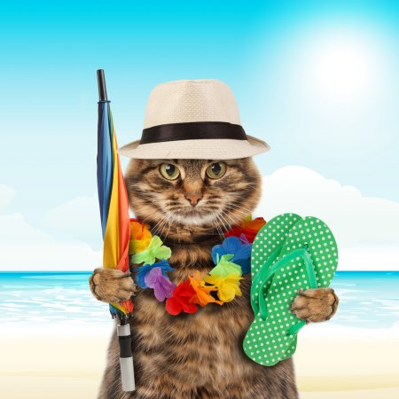 Funny cat going on vacation
