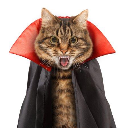 Gato malvado con colmillos