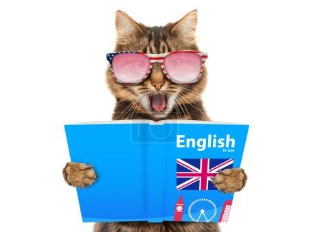 Photo pour Chat drôle dans lunettes de soleil apprend l'anglais. Chat en lisant un livre. - image libre de droit