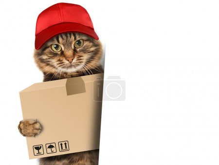 Photo for Funny cat - delivery service. Postman cat delivering a big package - Royalty Free Image