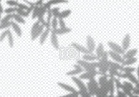 Illustration pour Vector Transparent Shadow of Branch Leaves. Élément de conception décorative pour les présentations et les maquettes. Effet de superposition créatif de l'ombre des arbres - image libre de droit