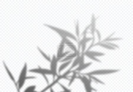 Illustration pour Ombre vectorielle transparente des feuilles d'arbre. Élément de design décoratif pour affiches et maquettes. Effet de superposition créatif. - image libre de droit