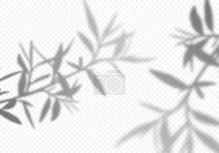 Illustration pour Ombres vectorielles transparentes des feuilles d'olivier. Éléments décoratifs pour collages. Effet de superposition créatif pour les maquettes. - image libre de droit