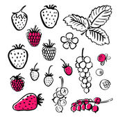 Vector handwritten food elements with rough edges Ink brush hand draw illustration Berries Icons