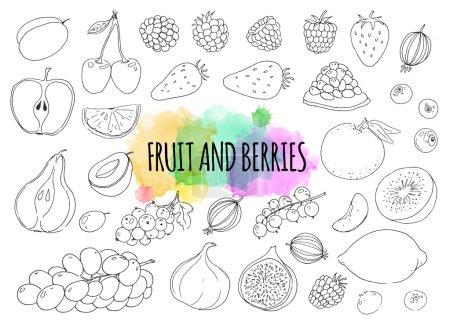 Illustration pour Eléments linéaires dessinés à la main. Prune, cerise, framboise, fraise, grenade, groseille à maquereau, citron, pomme, poire, abricot, raisin, groseille, figues, mandarine, kiwi. Fruits et baies . - image libre de droit