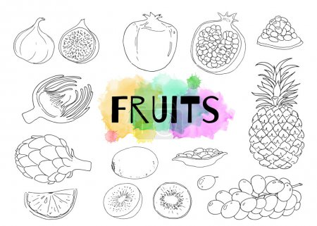 Linear hand drawn fruits