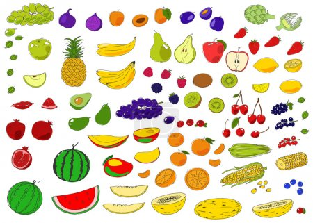 Colorful  fruits and berries