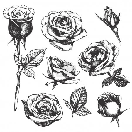 detailed hand-drawn roses.