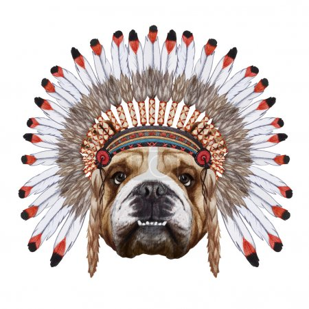 Portrait  of English Bulldog  in war bonnet.