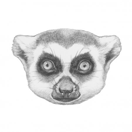 Hand drawn Lemur