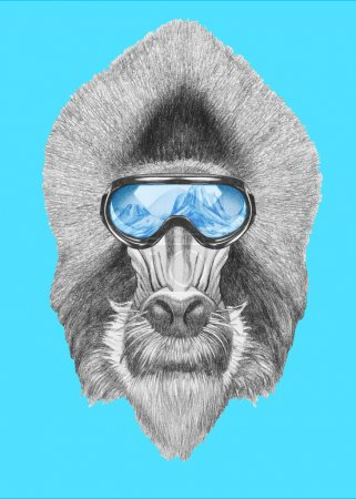 Portrait of Mandrill with ski goggles.