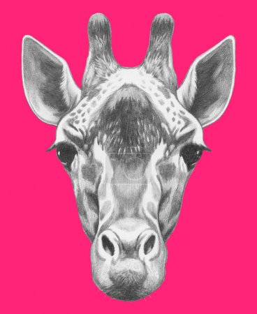 Hand drawn Portrait of Giraffe.