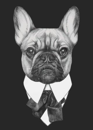 French Bulldog fashion portrait