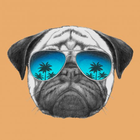 portrait of Pug Dog with sunglasses