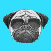 portrait of Pug Dog with sunglasses