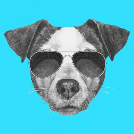 Jack Russell with sunglasses.