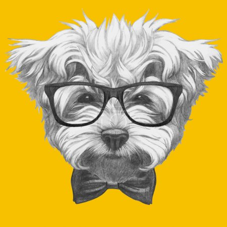 Maltese Poodle with glasses and bow tie