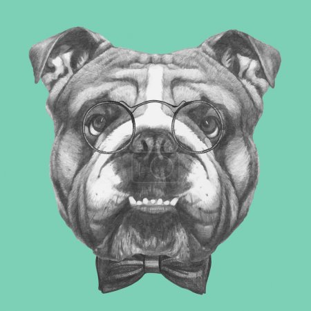English Bulldog with glasses and bow tie