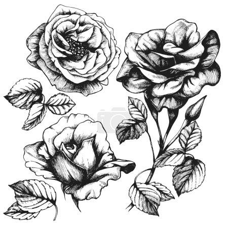 Hand-drawn roses