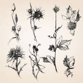 Hand-drawn sketches of plants