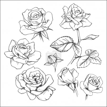 Set of hand drawn roses
