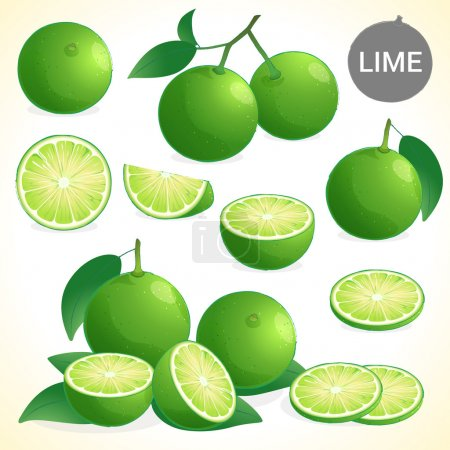 Set of green lime with leaf in various styles vect...