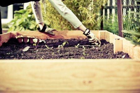 Urban gardening bio cultivation