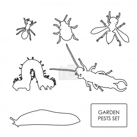 Set of garden pests on a white background. Outline of insects