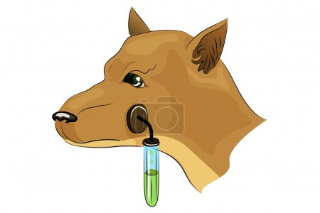 Pavlov's Dog. Experiments.