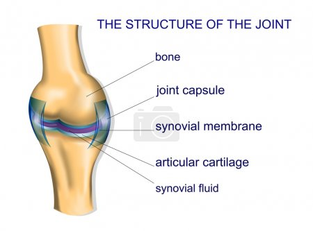 Illustration of the joint anatomy...