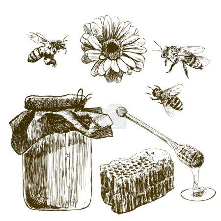 Photo pour Croquis miel ensemble. Illustrations vintage dessinées à la main . - image libre de droit