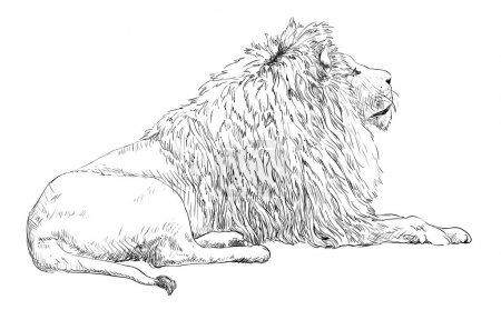 Illustration for Engrave isolated lion vector illustration sketch - Royalty Free Image