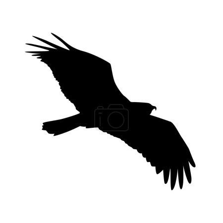 Vector silhouette of the Bird of Prey in flight wi...