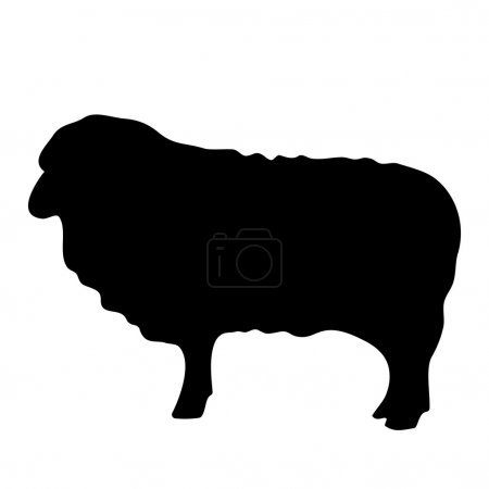 Vector black silhouette of the lamb