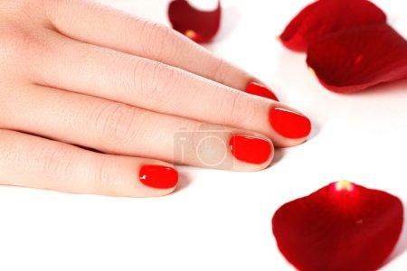 Photo pour Belles ongles femme avec rouge à ongles gros plan sur les pétales. manucure parfaite. mains femme aux ongles rouges manucure agrandi et rose. Soins de la peau et des ongles. - image libre de droit