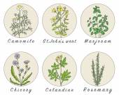 Set of spices herbs and officinale plants icons
