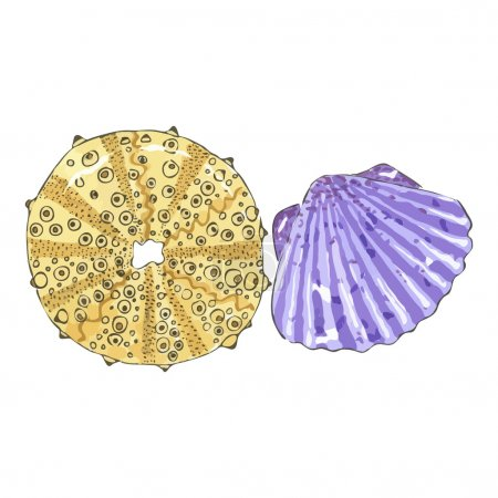 Sea shell in yellow and violet colors